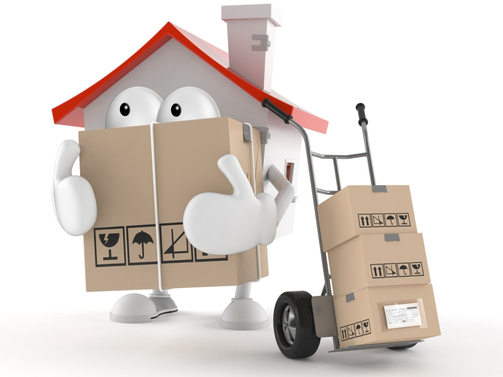 Doves Removals